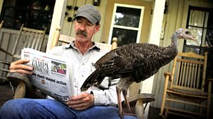 Natural World - 2011-2012: 1. My Life As A Turkey: Natural World Special