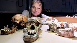 Origins Of Us - 3. Brains