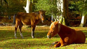 A Year In The Wild - The New Forest