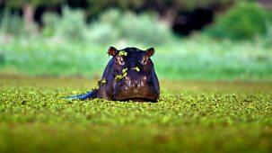 Nature's Microworlds - 5. Okavango