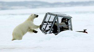 The Polar Bear Family & Me - 1. Spring