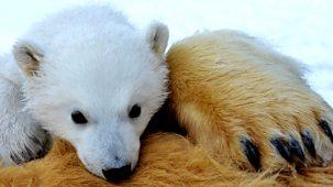 The Polar Bear Family & Me - 2. Summer