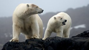 The Polar Bear Family & Me - 3. Autumn