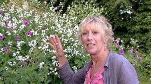 Life In A Cottage Garden With Carol Klein - Reversioned Series: 1. Summer