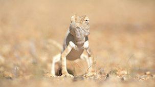 Nature's Microworlds - 9. Namib Desert