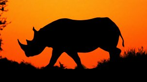 Natural World - 2012-2013: 10. Flight Of The Rhino