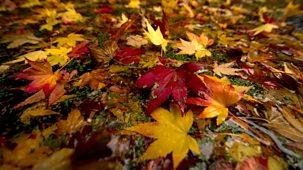 The Great British Year - Original Series: 4. Autumn