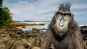 Natural World - 2013-2014 - Meet The Monkeys