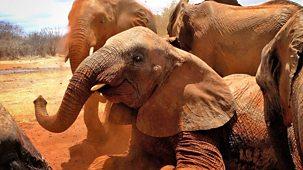 Elephant Diaries - Series 1: Episode 4