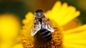 Bees, Butterflies And Blooms - 2. Towns, Gardens And Britain In Bloom