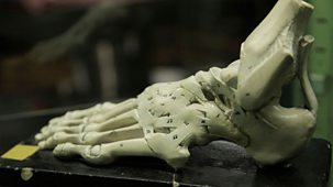 Dissected - 2. The Incredible Human Foot