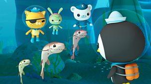Octonauts - Series 1 - The Cookiecutter Shark