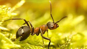 The Wonder Of Animals - Ants