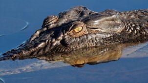 The Wonder Of Animals - Crocodiles