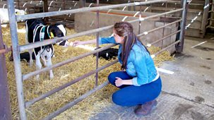 My Pet And Me - 5. Calf