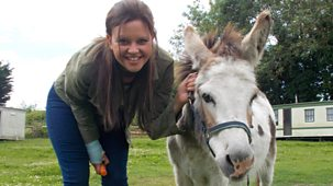 My Pet And Me - 11. Donkeys