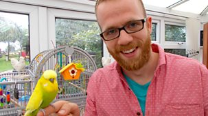 My Pet And Me - 14. Budgies