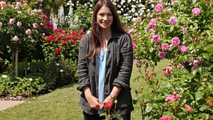 Great British Garden Revival - Series 2: 1. Roses And Climbers & Creepers