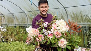 Great British Garden Revival - Series 2: 3. Rhododendrons And Carnations