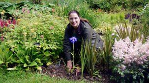 Great British Garden Revival - Series 2: 6. Irises And Ornamental Grasses