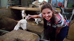 My Pet And Me - 17. Goats