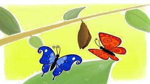 Melody - Series 2: 18. Little Blue Butterfly