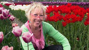 Carol Klein's Plant Odysseys - 2. Tulips