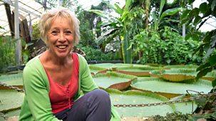 Carol Klein's Plant Odysseys - 4. Waterlily