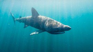 Big Blue Uk - 2. Sharks