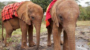 This Wild Life - 4. Baby Elephant Rescue