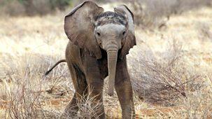 This Wild Life - 10. Elephant Baby Boom