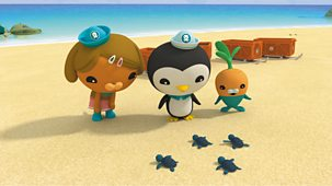 Octonauts - Series 4: 4. Octonauts And The Baby Sea Turtles