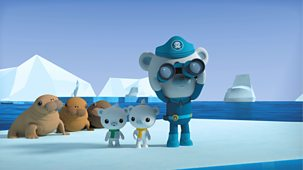 Octonauts - Series 4: 5. Octonauts And The Walrus Pups