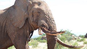 Nature's Epic Journeys - 1. Elephants