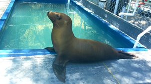 Matilda And The Ramsay Bunch - Series 2: 5. The Sea Lion Rescue