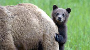 Animal Babies - 3. Mountain Babies