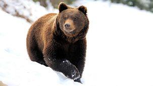 Yellowstone: Wildest Winter To Blazing Summer - 1. The Wildest Winter