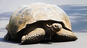 My Pet And Me - Galapagos Special: 2. Giant Tortoise