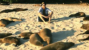 My Pet And Me - Galapagos Special: 4. Sea Lions