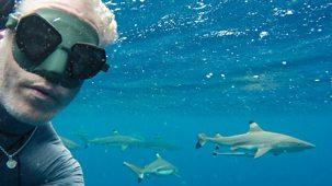 Tribes, Predators & Me - Series 2: 1. Shark People Of The Pacific