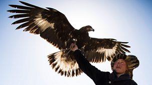 Tribes, Predators & Me - Series 2: 2. Eagle People Of Mongolia