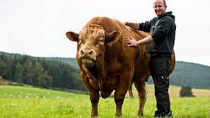This Farming Life - Series 2: Episode 9