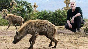 Tribes, Predators & Me - Series 2: 3. Hyena People Of Ethiopia