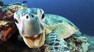 Blue Planet Ii - Series 1: 3. Coral Reefs
