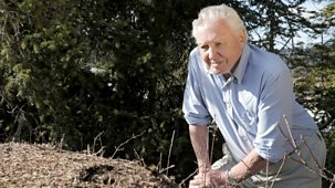 Natural World - 2017-2018: 8. Attenborough And The Empire Of The Ants