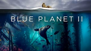 Blue Planet Ii - Series 1: 1. One Ocean