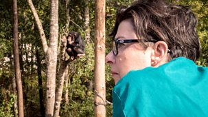 Sue Perkins And The Chimp Sanctuary - Episode 14-10-2018