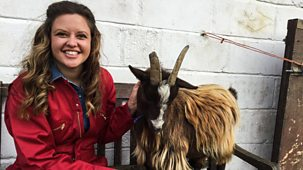 Ferne And Rory's Vet Tales - Series 1: 15. Gerald The Goat
