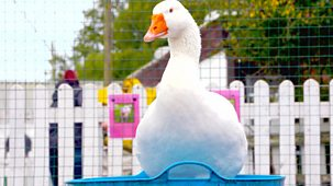 Ferne And Rory's Vet Tales - Series 1: 18. Clementine The Goose