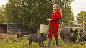 Ferne And Rory's Vet Tales - Series 1: 25. Pig Farm